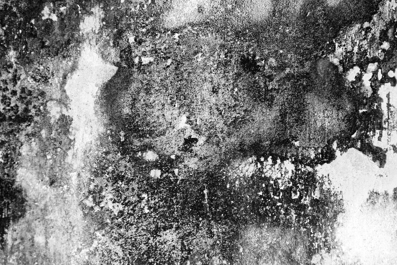 Schimmel an der Wand Schimmelpilz Befall Bautrocknung Duregger Bautrockner mieten Luftentfeuchter Feuchtigkeit Schimmelsporen Gesundheit